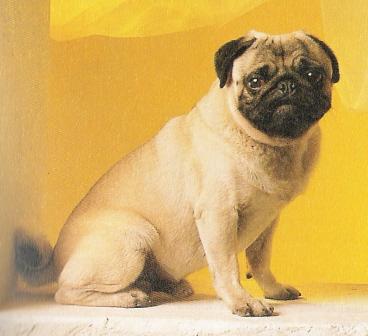 comment dr sser un chien forum chiens. Black Bedroom Furniture Sets. Home Design Ideas